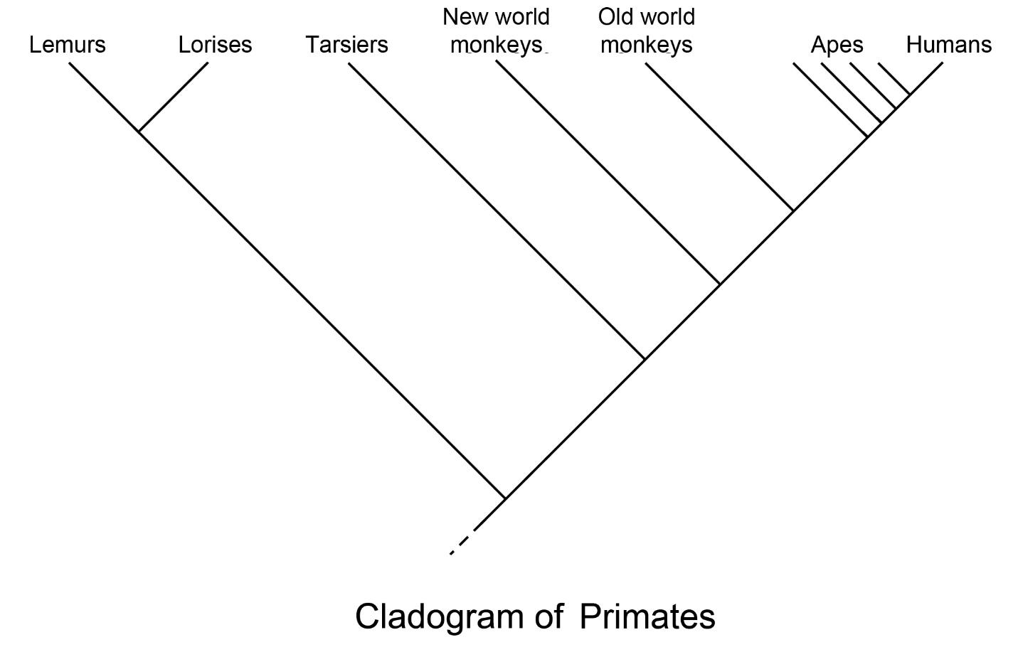 2. Primate Classification | The History Of Our Tribe: Hominini
