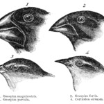Evidence Of Common Descent - Wikipedia