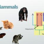 Evolutionary Relationships: Definition & Diagram Video