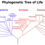 Fact Sheet: Rrna In Evolutionary Studies And Environmental