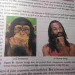 In My Science Book It Is Under The Heading 'evolution Should