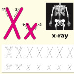 Letter X Tracing Alphabet Worksheets - Download Free Vectors