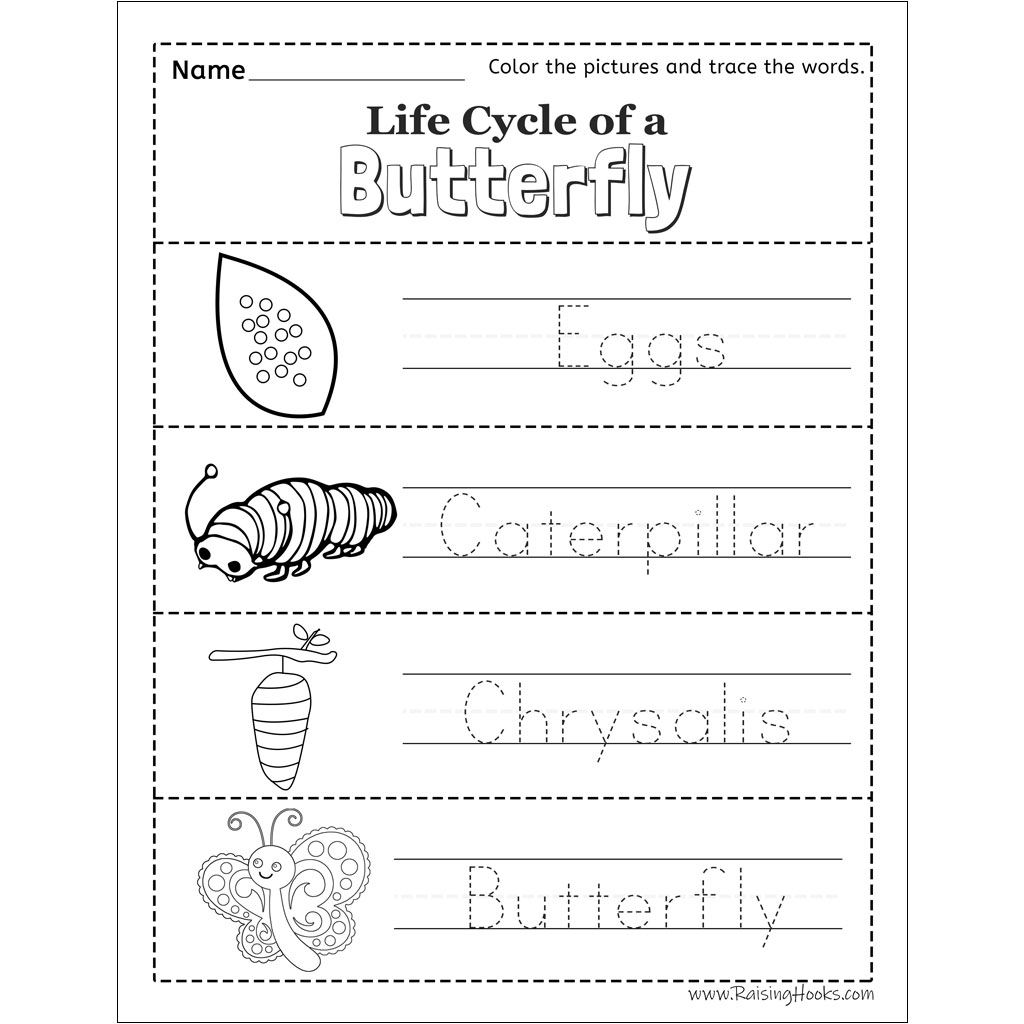 Life Cycle Of A Butterfly Tracing Worksheet - Raising Hooks