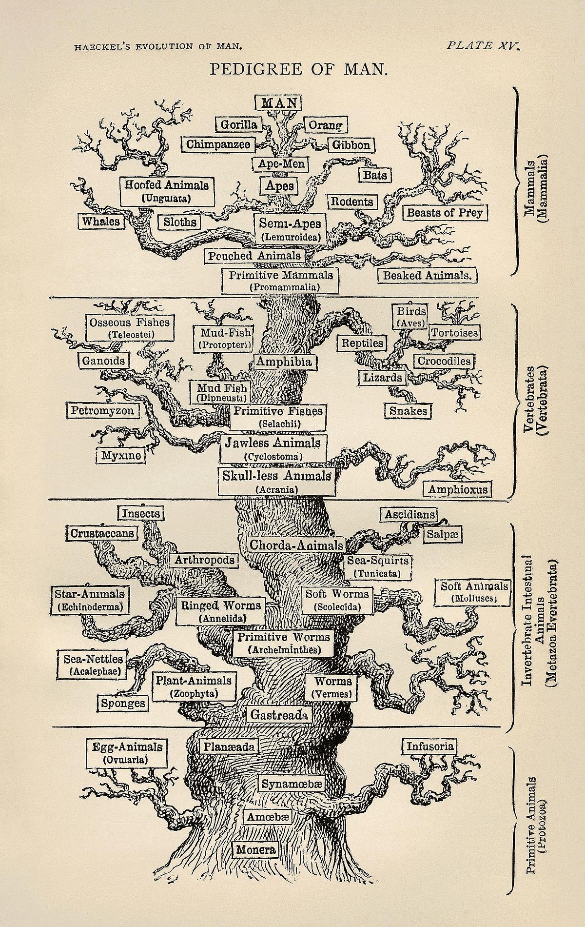 Molecular Phylogenetics - Wikipedia