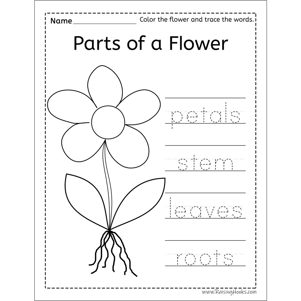 Parts Of A Flower Word Trace - Raising Hooks