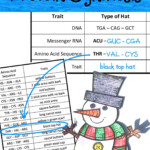 Build A Snowman Using Protein Synthesis Lab Activity