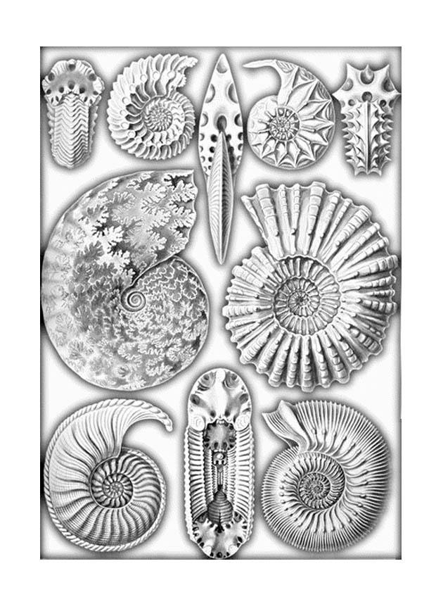 Coloring Page Fossils Free Printable Coloring Pages