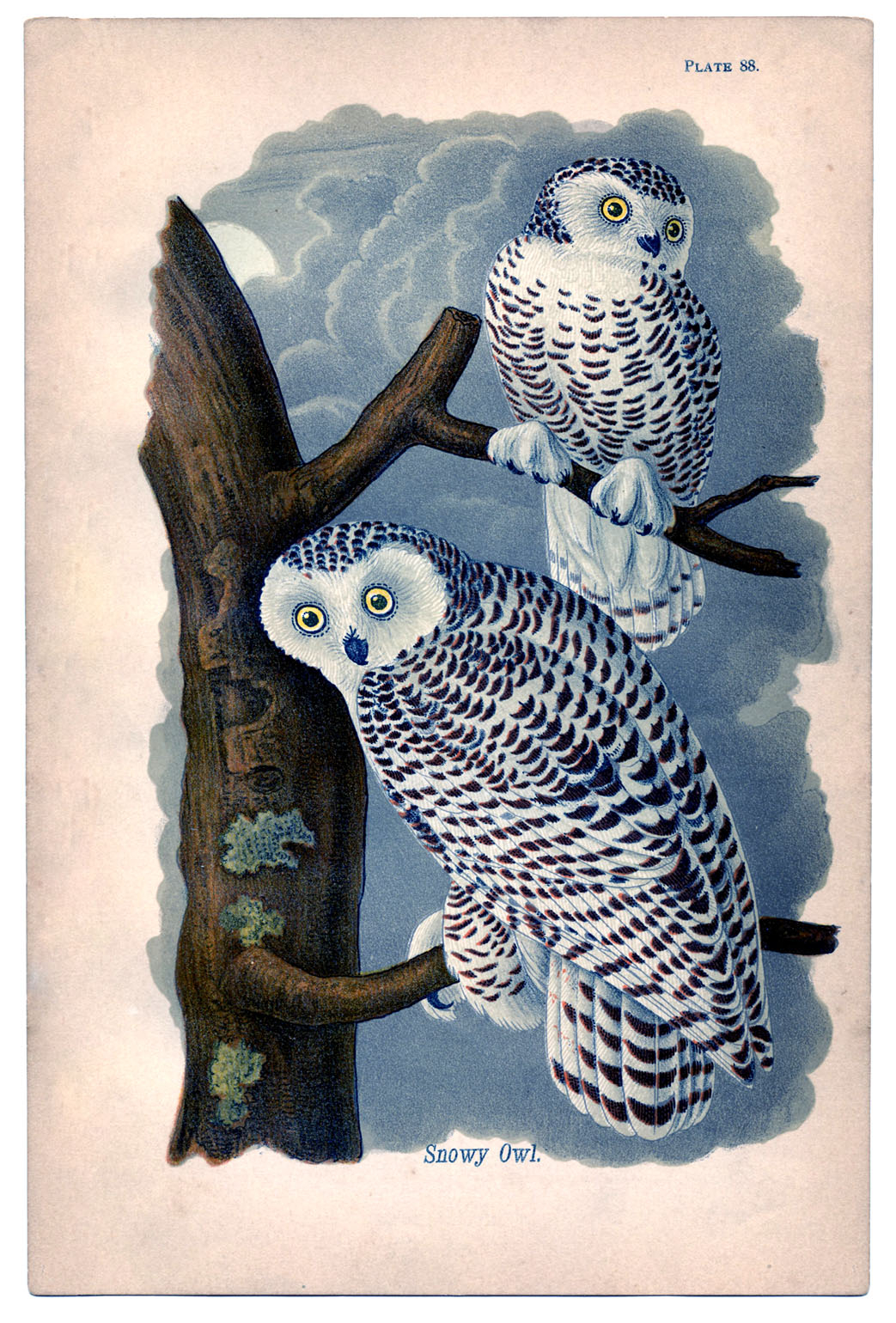Instant Art Printable Lovely Snowy Owls The Graphics Fairy